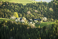 Austria, Styria, Western Styria, Deutschlandsberg, farmhouses on blossoming landscape - HHF004739