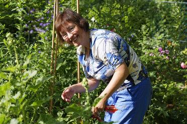 Germany, Bavaria, woman gardening in garden - SIEF005147