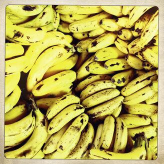 Banana (Musa paradisiaca), Puerto de Naos, La Palma, Canary Islands, Spain - SEF000602