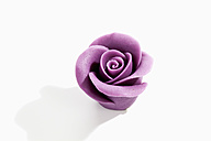 Purple marzipan blossom on white background - CSF020988