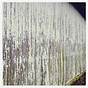 Weathered wooden wall of a shed, Heeslingen, Lower Saxony, Germany - MSF003471