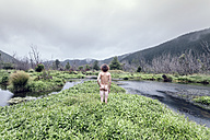 New Zealand, next to Picton, Rear view of nude man - WV000463
