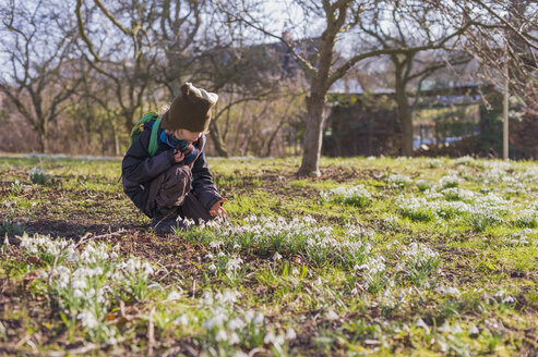 Germany, Mecklenburg-Western Pomerania, Ruegen, little boy crouching on meadow with snowdrops - MJF000952