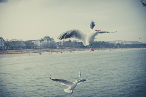 Germany, Mecklenburg-Western Pomerania, Ruegen, Binz, seagulls in the air - MJF000942