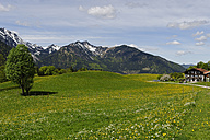 Germany, Bavaria, Meadows at Hochkreuth in the Leitzach valley near Bayerischzell - LB000681