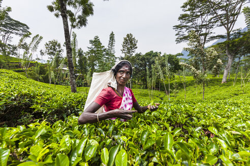 Sri Lanka, Udapalatha, Tea picker on tea plantation - AM001920