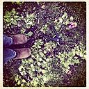 Garden clogs, garden scissors, primroses - LVF000835