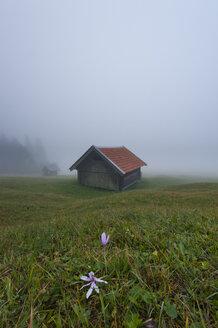 Germany, Bavaria, Werdenfelser Land, Hay barn in fog - RJF000035