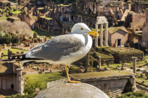 Italy, Rome, Seagull in front of Forum Romanum - EJWF000339