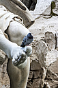 Italy, Rome, Piazza Navona, Pigeon on Fontana dei Quattro Fiumi - EJWF000350