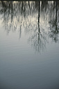 Reflections of trees on a lake - AXF000660