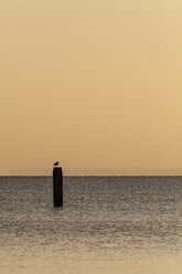 Germany, Timmendorfer Strand, Seagull perching on post in Baltic Sea - SR000398
