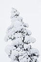 Finland, Snow-capped tree - SR000392