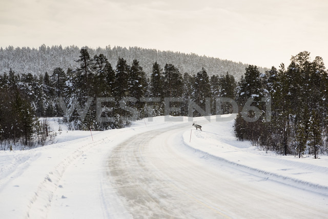 Finland, Winter landscape near Inari - SR000387