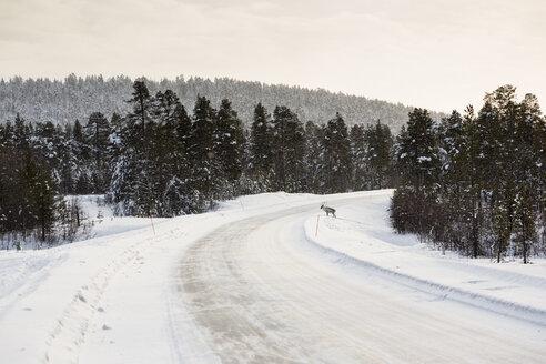 Finland, Winter landscape near Inari - SR000387