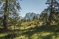 Austria, Lungau, forest and mountains - KVF000042