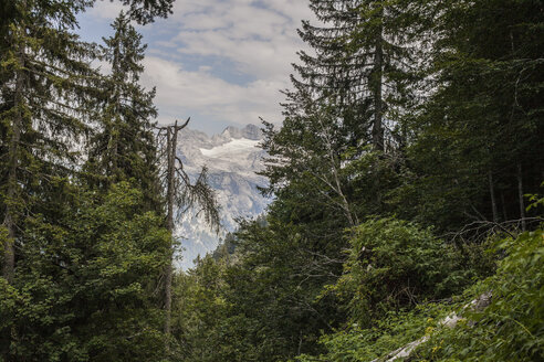 Austria, Gosau, glacier and forest - KVF000088