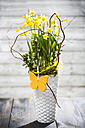 Daffodil (Narcissus pseudonarcissus) in a vase - MAEF008209