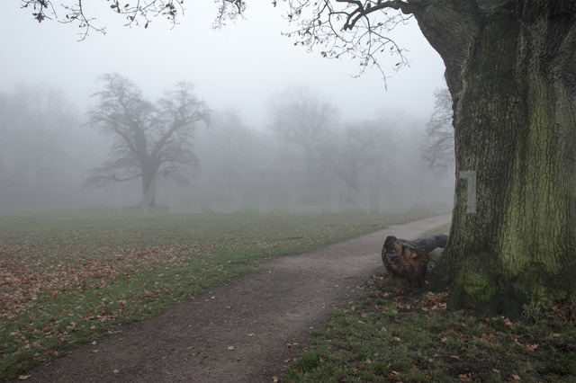 Germany, Hamburg, Jenischpark in fog - RJF000037