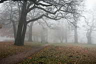 Germany, Hamburg, Jenischpark in fog - RJF000036