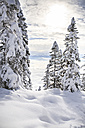 Austria, Winter forest in Alps near Kufstein - VTF000182