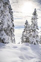Austria, Winter forest in Alps near Kufstein - VTF000182
