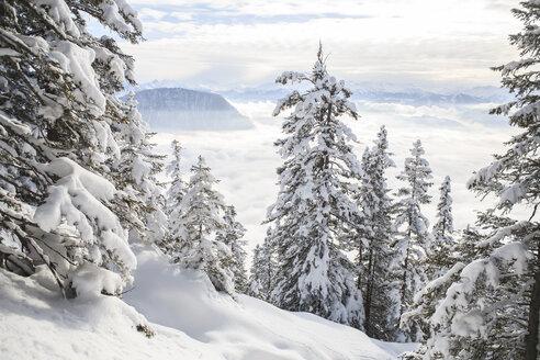 Austria, Kufstein, Winter forest in Alps - VTF000183