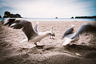 New Zealand, North Island, Cathedral Cove and seagulls on beach - WV000478