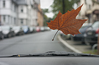 Germany, Frankfurt, Autumn leaf on windscreen - MUF001465