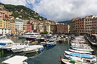 Italy, Liguria, Harbor and town of Camogli - AMF002042