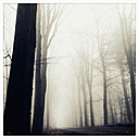 Morning fog in the forest of the Harburg Hills, Hamburg, Germany - MSF003493