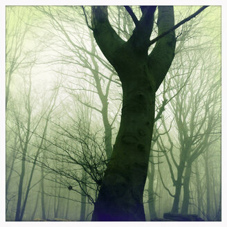 Morning fog in the forest of the Harburg Hills, Hamburg, Germany - MSF003507