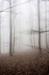 Germany, Hesse, fog in the nature park Taunus - ATAF000035