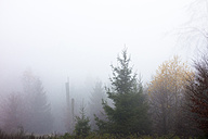 Germany, Hesse, fog in the nature park Taunus - ATAF000031