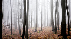 Germany, Hesse, fog in the nature park Taunus - ATAF000028