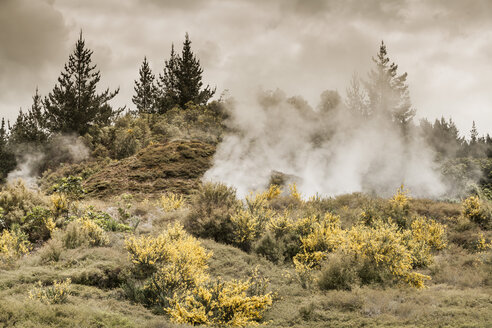 New Zealand, Taupo Volcanic Zone, Craters of the Moon, geothermal field - WV000523
