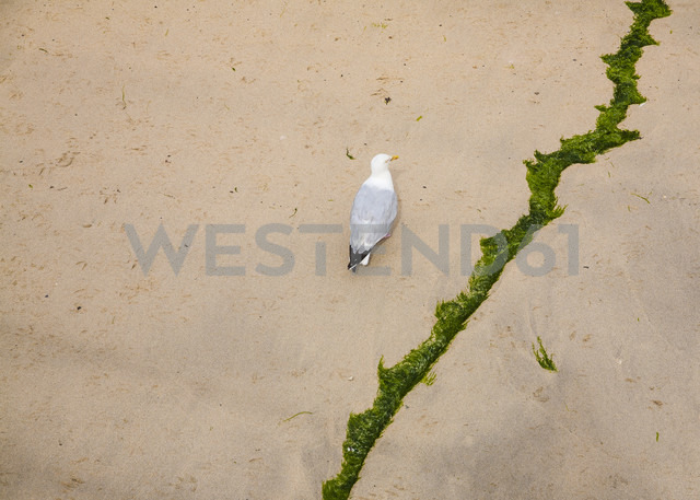 Seagull and docking line on sand at low tide, elevated view - DISF000682