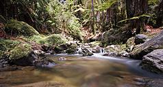 New Zealand, Whakapapa area, Tupapakurua falls, rain forest - WV000551