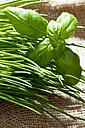 Chives (Allium schoenoprasum) and basil on jute, close-up - CSF021112