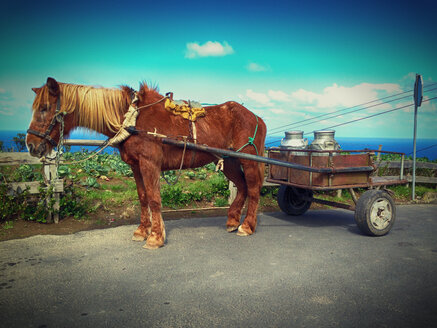 Horse with cart and milk jugs, Sao Miguel, Azores, Portugal - ON000441