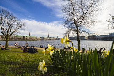 Germany, Hamburg, Inner Alster Lake in spring, daffodils in the foreground - KRPF000405