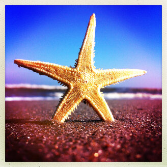 Starfish at the Beach, Norderney, Lower Saxony, Germany - JAWF000022