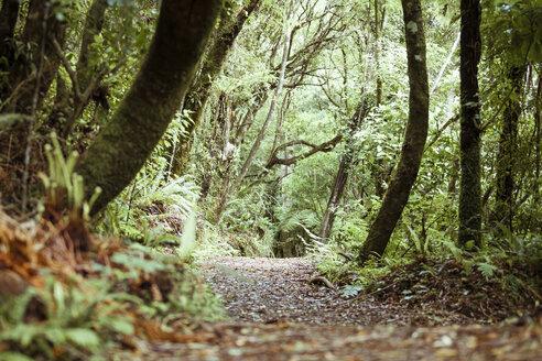 New Zealand, Pukaha Mount Bruce National Wildlife Centre, rain forest - WV000580