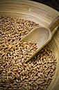 Bowl of spelt grains and wooden shovel, partial view - LVF000985