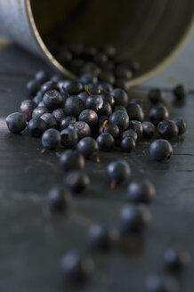 Blueberries, Vaccinium myrtillus, pail - ASF005329