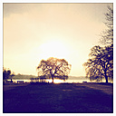 Outer Alster Lake in the morning light, tree in backlight, Hamburg, Germany - MSF003685