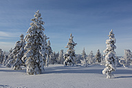 Finnland, near Saariselka, Snow covered trees - SR000476