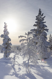Finnland, near Saariselka, Snow covered trees - SR000470