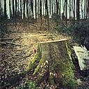 Stump of a felled beech, Wuppertal, Germany - DWIF000013