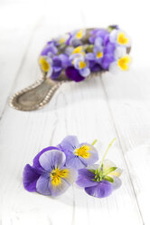 Pansies, Viola, on wooden table and in a colander - CSTF000221